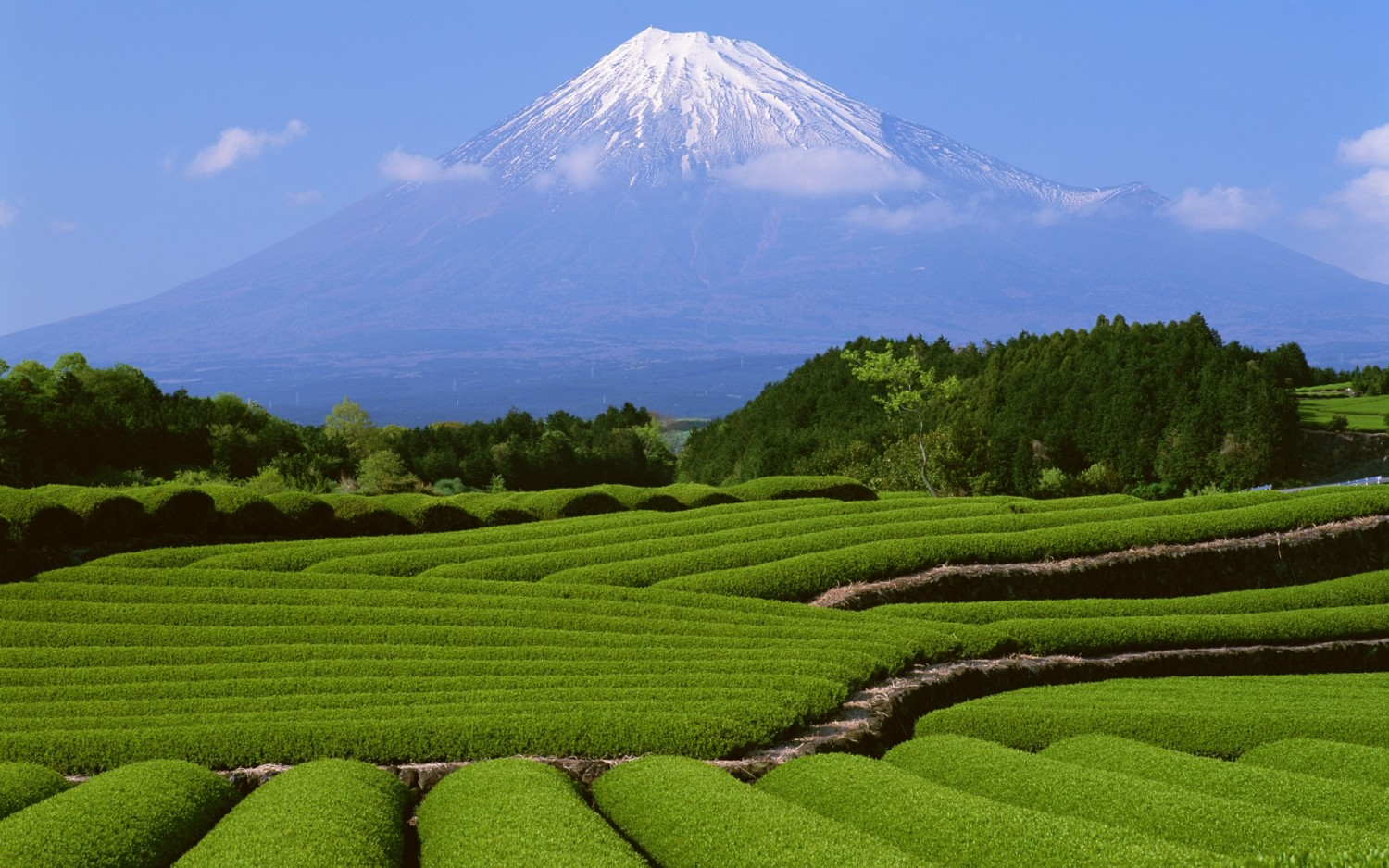 fuji mountain in summer japan